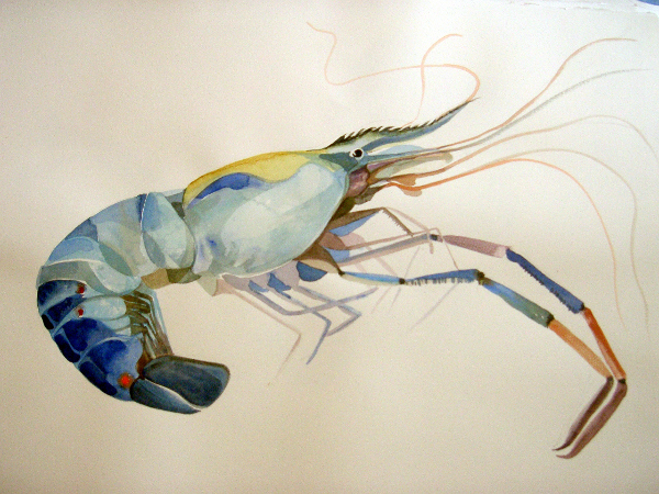"Giant Shrimp 22""X30"" Sold"