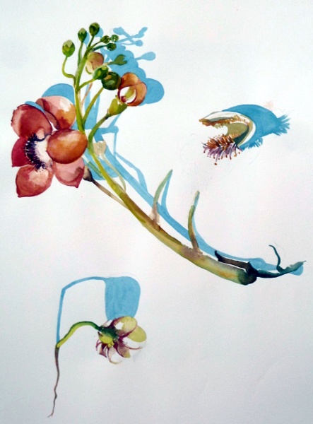 "Cannonball Tree Flower 22""X30"""
